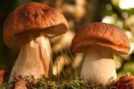 Блюда из грибов - фото